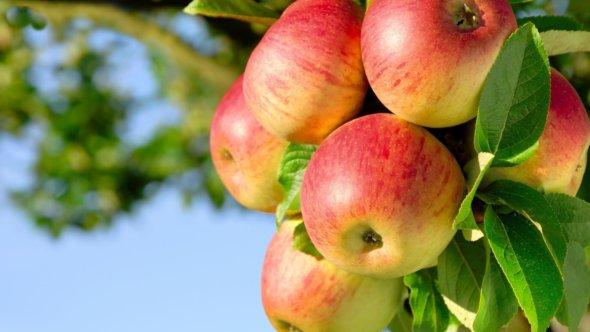 если есть одни яблоки неделю на сколько можно похудеть